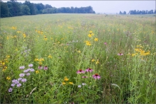 A new cooperative program will look at a number of conservation topics, including tallgrass prairies. The program combines on-line sessions with field experiences.
